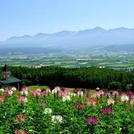 NIKON NIKON D90で撮影した風景(「花畑の丘で深呼吸」~富良野にて~)の写真(画像)