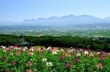 「花畑の丘で深呼吸」~富良野にて~