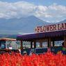 NIKON NIKON D90で撮影した風景(かんのファームにて 花畑のトラクター)の写真(画像)