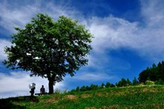 白い日傘~富良野にて