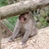 野猿公苑7