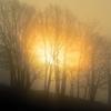 燃える朝陽