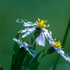 野辺花の願い