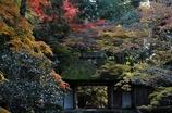 錦秋の京都 法然院