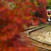 渡良瀬の秋