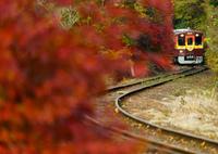SONY ILCE-7RM2で撮影した(渡良瀬の秋)の写真(画像)