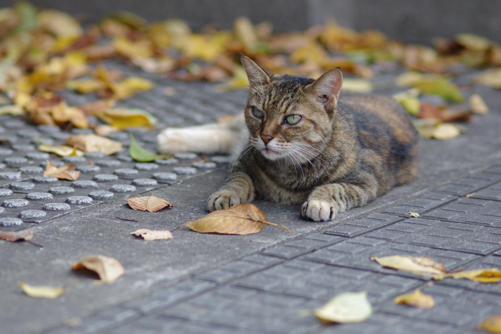 秋はそろそろと