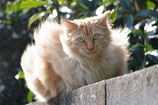 超サイヤ猫