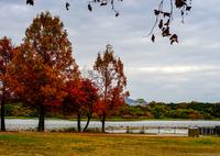 SONY ILCE-7M2で撮影した(去りゆく秋)の写真(画像)