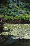 あじさい池