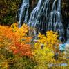 秋景・白髭の滝