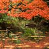 紅葉の棲み処 Ⅱ
