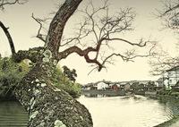 ninjinの松江百景 八雲の愛した堀端の風景
