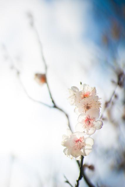 花・草木写真集