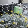 雪朝寸景#6_花