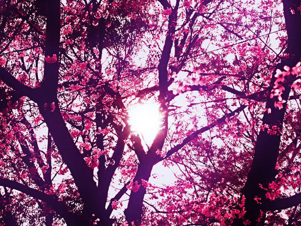 太陽に感謝。