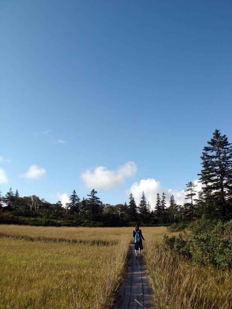 神仙沼の木道 その2