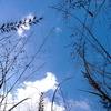 秋の虫の空
