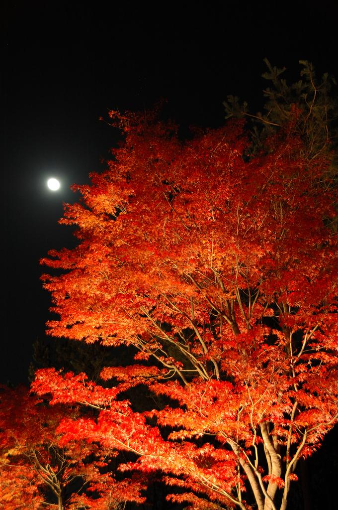 紅葉と満月
