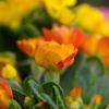 並んだお花