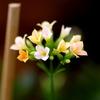 可憐な花 1