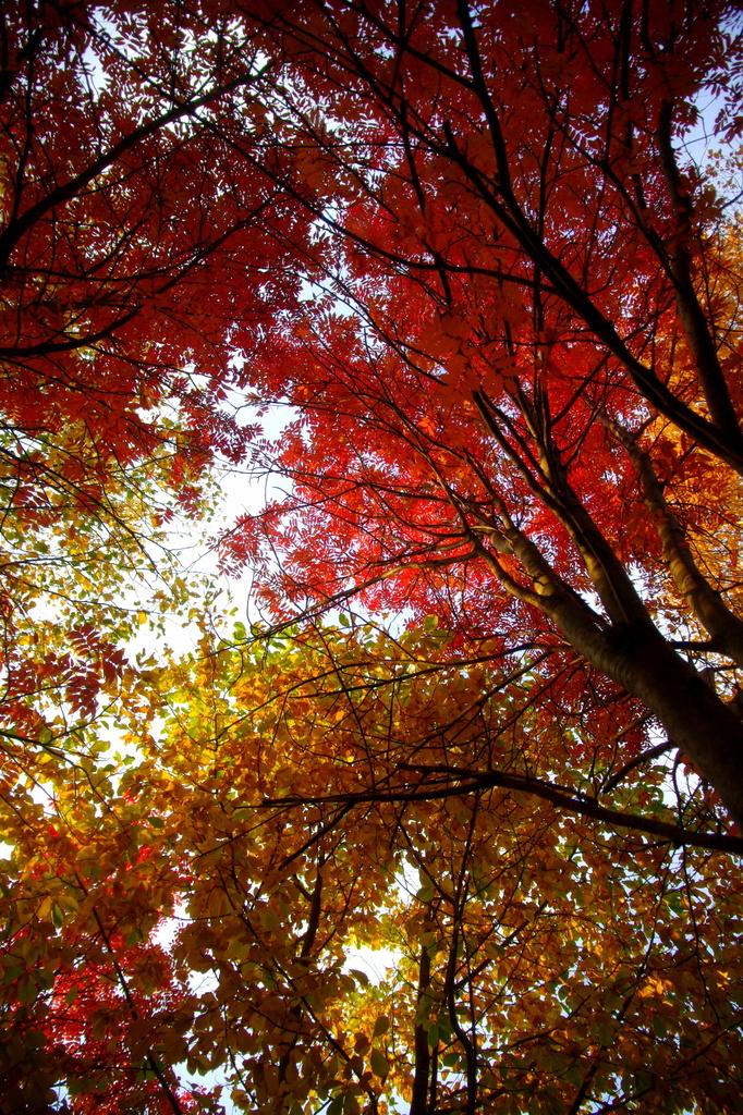 紅葉&黄葉