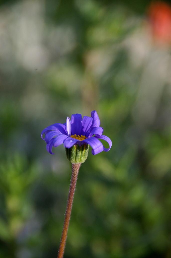 綺麗な紫色