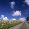 富良野の道