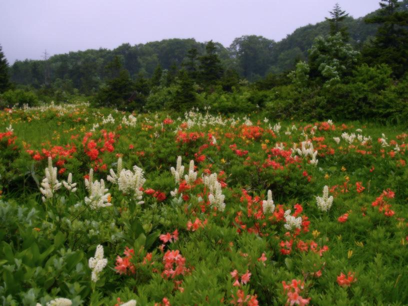 雲上の花畑