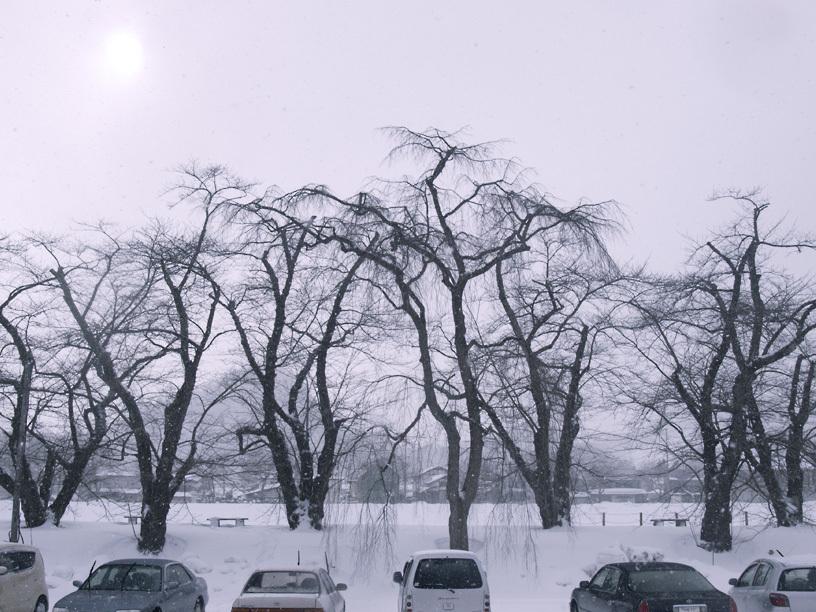並木雪景色