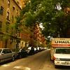 木の繁る街角