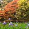 春の花、秋の木