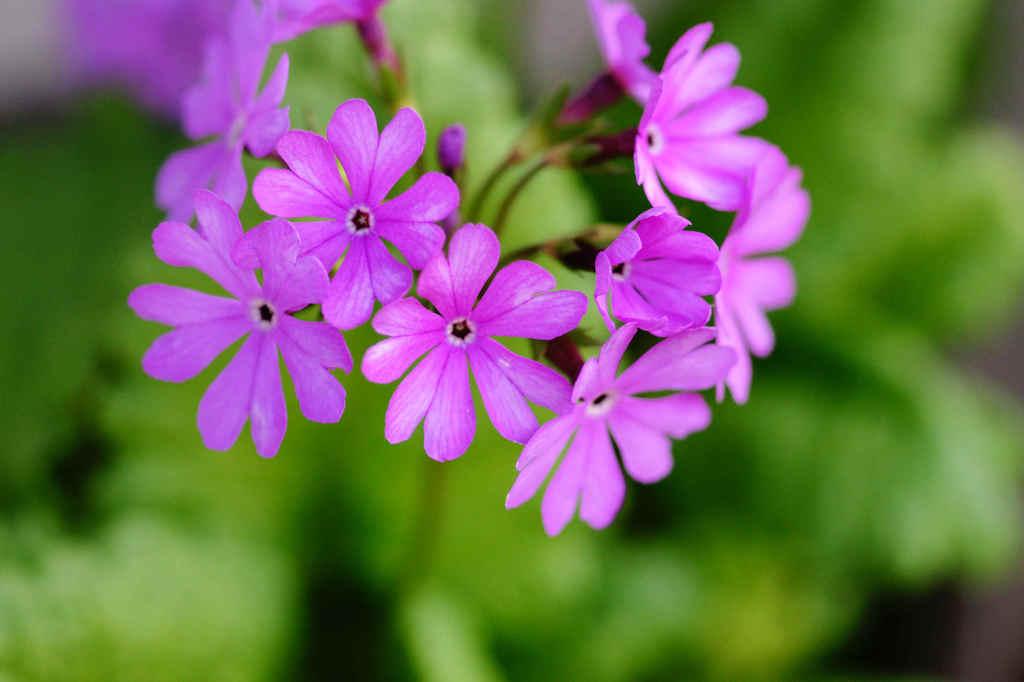 名前のわからない花 その1