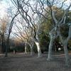 植物園、サルスベリ
