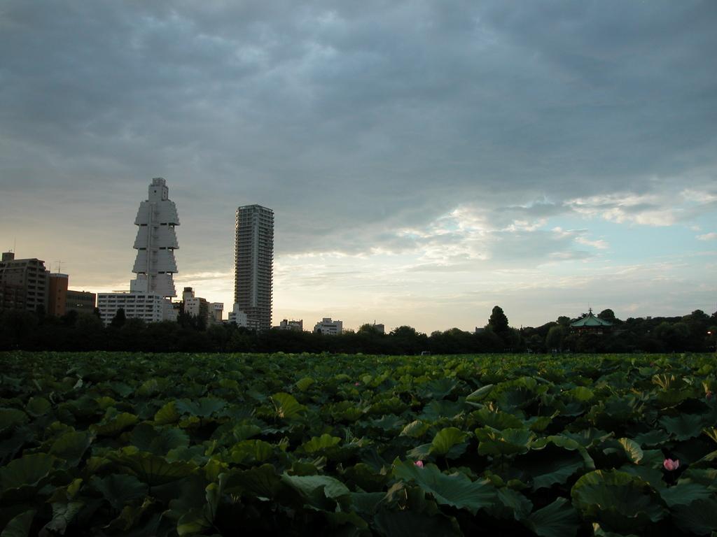 不忍池、蓮の花、二本のタワー
