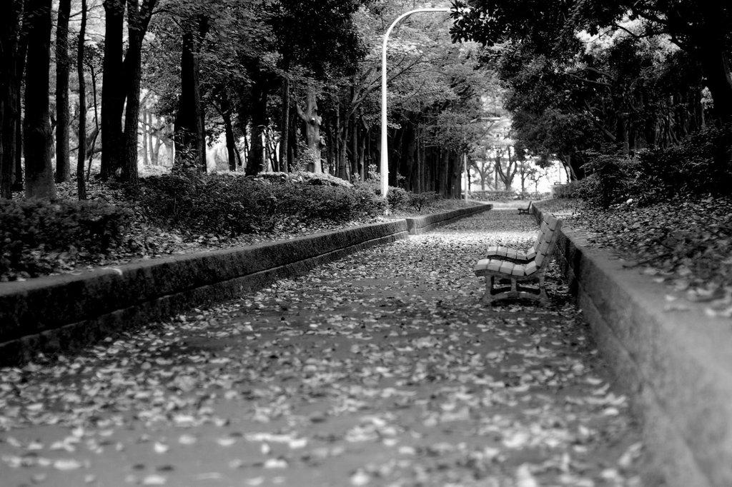 悲しき散歩道