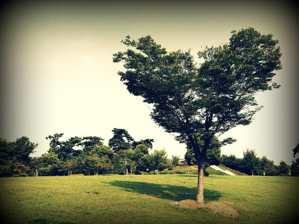ハート型の木
