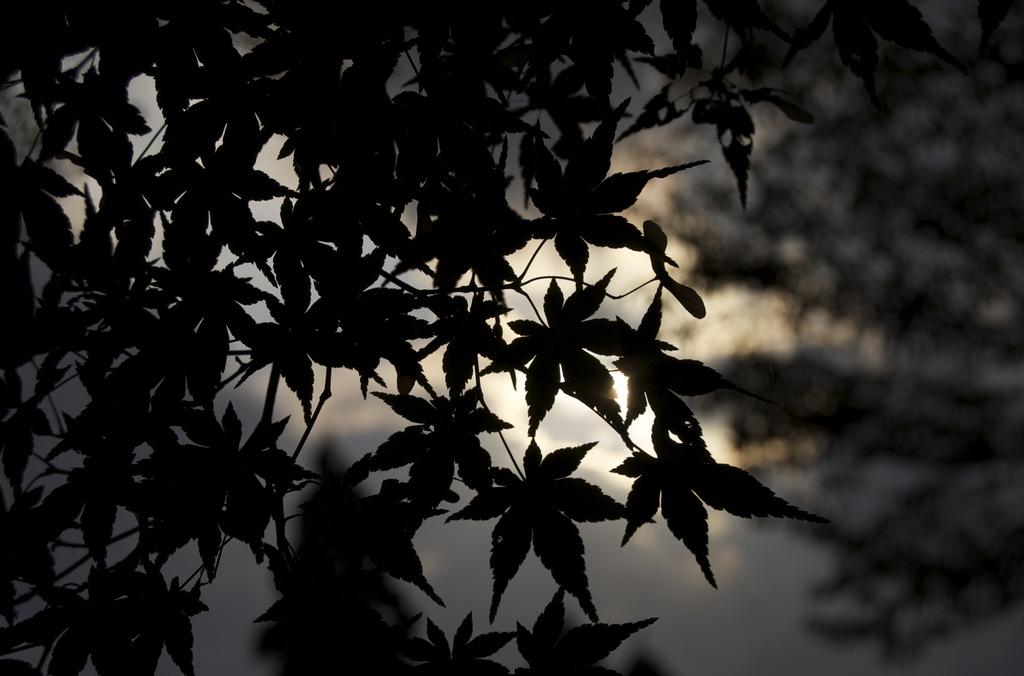 東山植物園:Autumn flavor