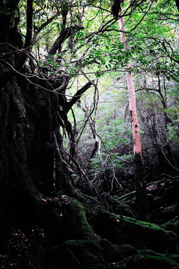 森の中で・・・