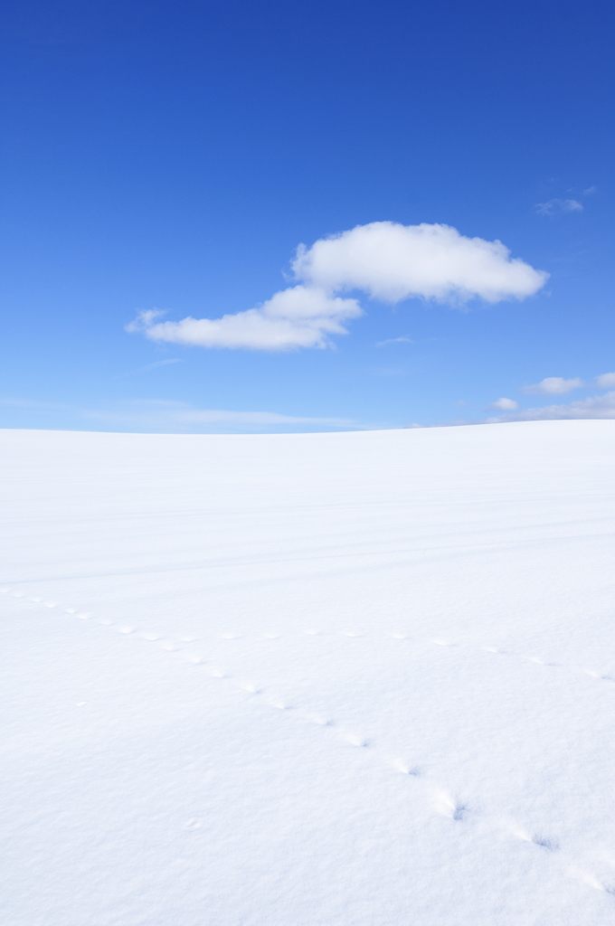 はぐれ雲ー2009冬
