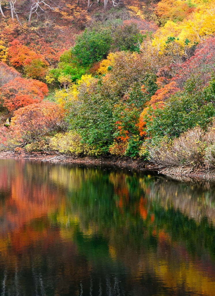 彩り際だつ秋