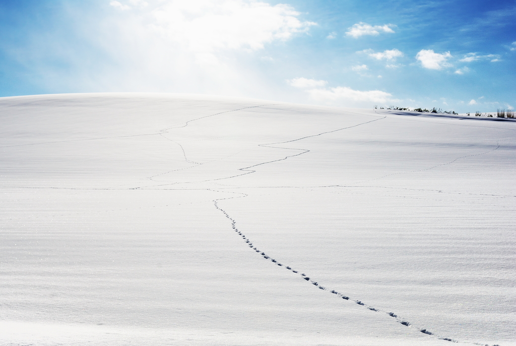 Footprints on the Snow Field