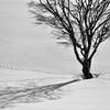 丘の孤木ー2014 《Monochrome》