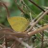 今年初めての蝶
