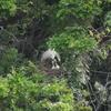 オオサギの巣2