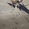 砂浜でぶるぶる