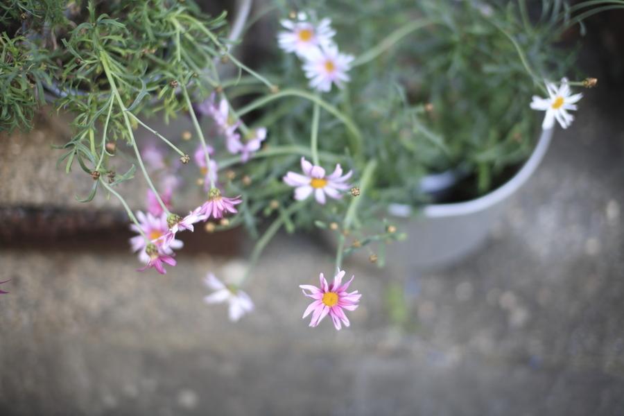 寂しい花。