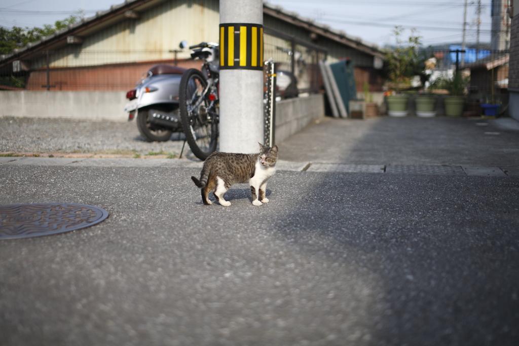 昼下がりの猫。