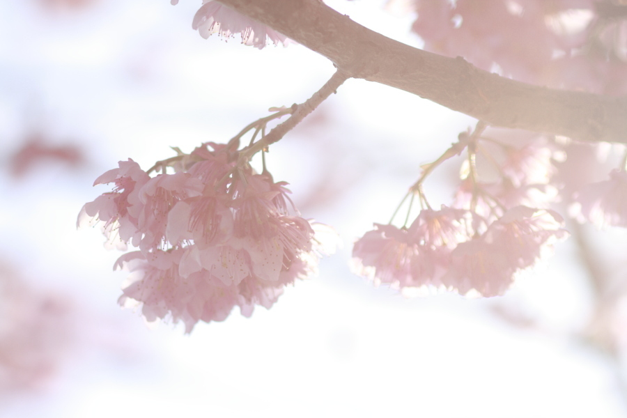 光あふれる春