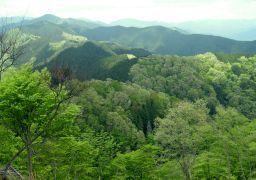 新緑の山2_256